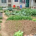 阿嬤家後院的菜園