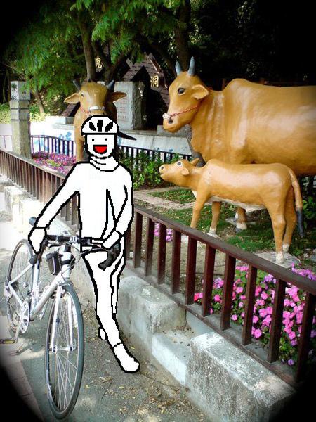露西寶貝與牛罵頭的三頭牛.jpg