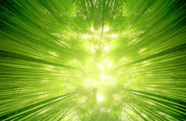 竹林風韻之二---攝影達人作品