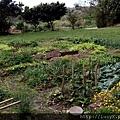 門一打開,一大片的菜園!