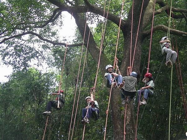 爬樹--06