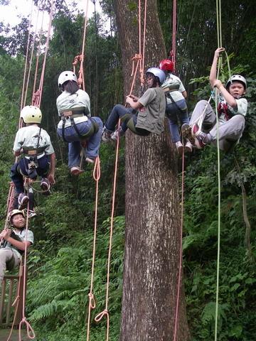 爬樹--04