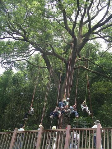 爬樹--05