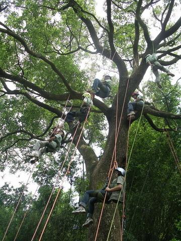 爬樹--07