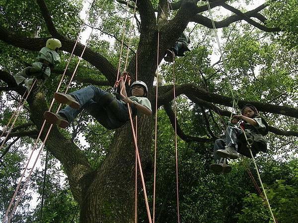 爬樹--09