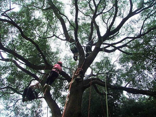 爬樹--10
