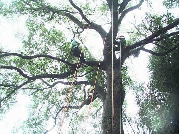 爬樹--13