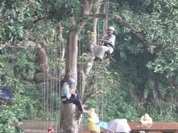 爬樹--信志01