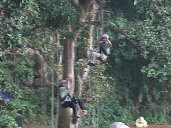 爬樹--信志02