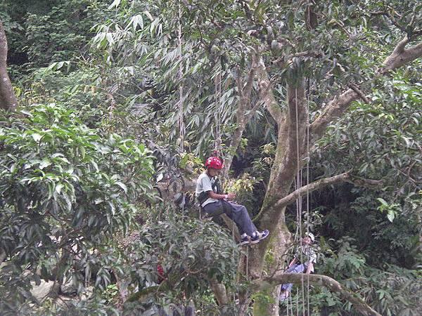 爬樹--柏祥09