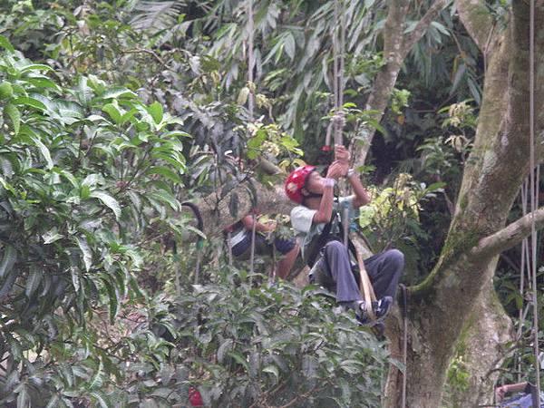 爬樹--柏祥08