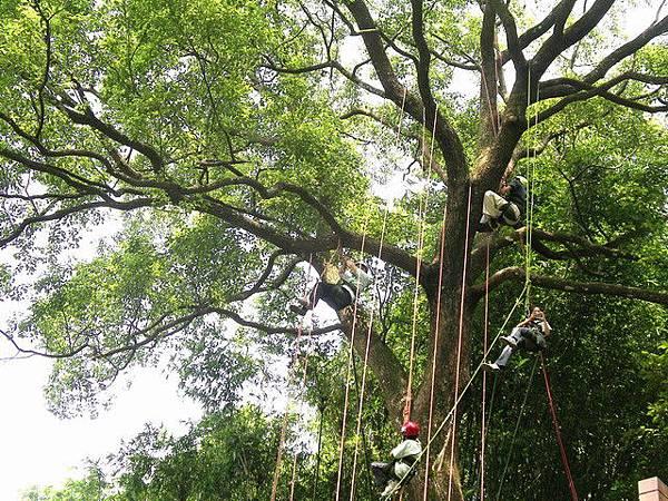 爬樹--海金沙08