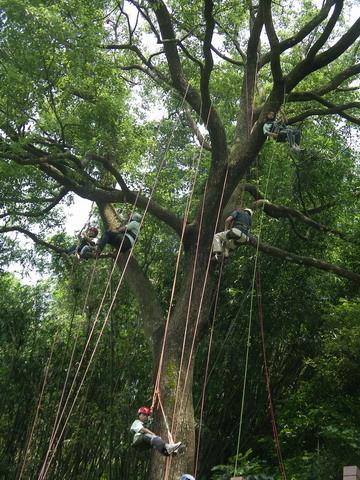 爬樹--海金沙07