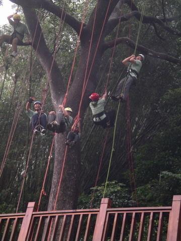 爬樹--海金沙10