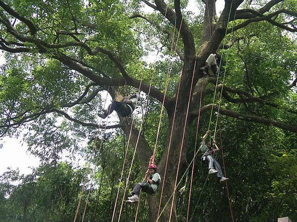爬樹--海金沙09