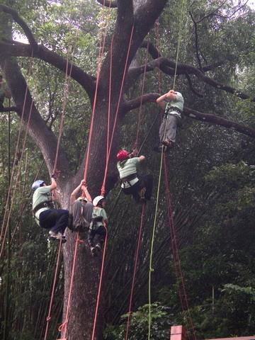 爬樹--海金沙11