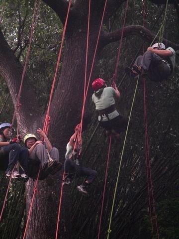 爬樹--海金沙14