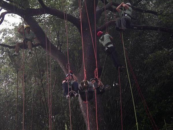 爬樹--海金沙12
