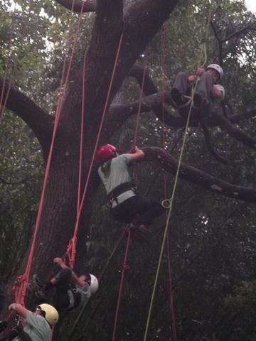 爬樹--海金沙17
