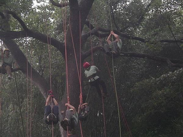 爬樹--海金沙16