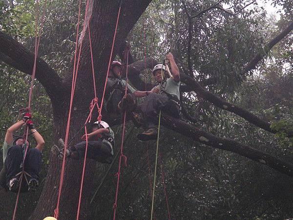 爬樹--海金沙20