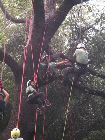 爬樹--海金沙19