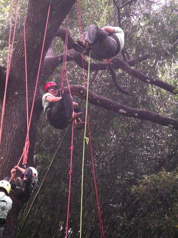爬樹--海金沙18