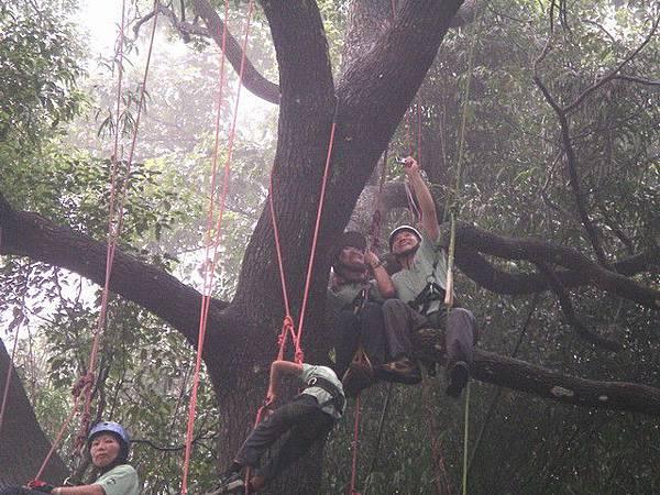 爬樹--海金沙21