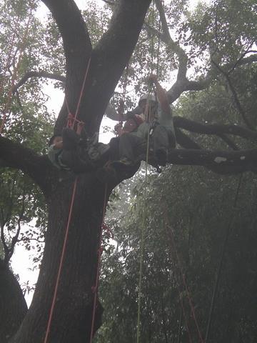 爬樹--海金沙23