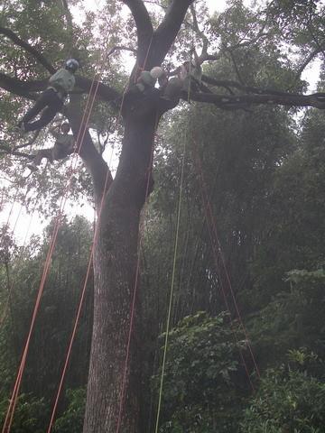 爬樹--海金沙25