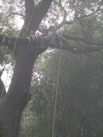 爬樹--海金沙27