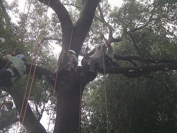 爬樹--海金沙26