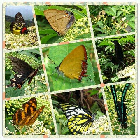勝興定觀1010624蝴蝶