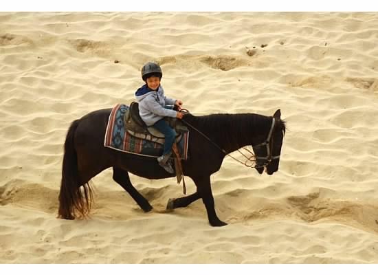 horse11.jpg