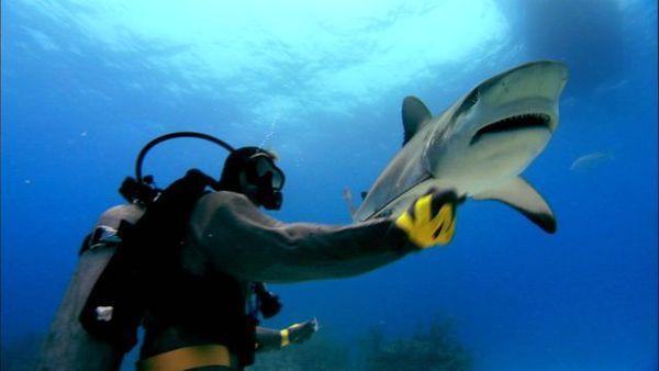 sharkwater5.jpg