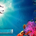 sharkwater_reef_640x480.jpg