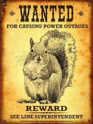 Wanted Squirrel.jpg