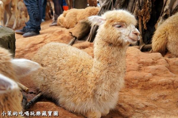 天馬牧場:【台中】天馬牧場沒有天馬,有草泥馬!