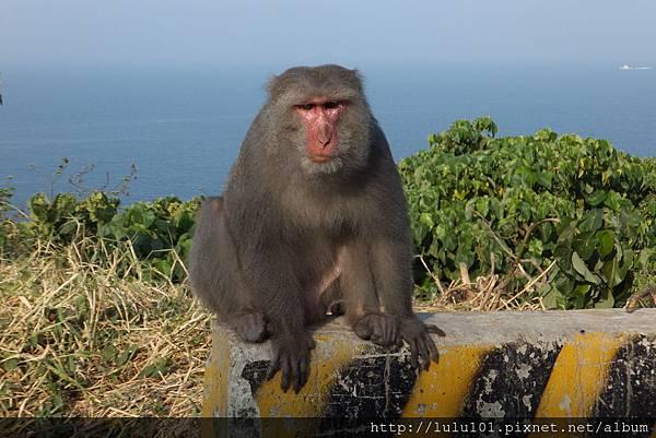 柴山猴 2013 0 (19)