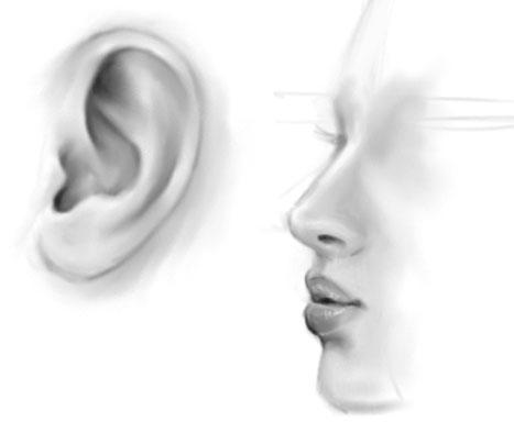 耳.jpg