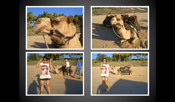 camel4.bmp