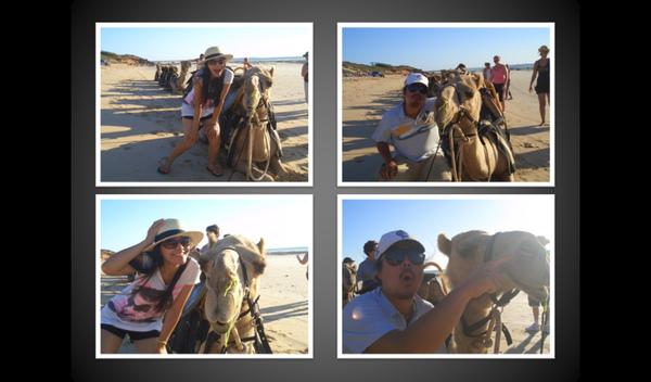 camel 1.bmp