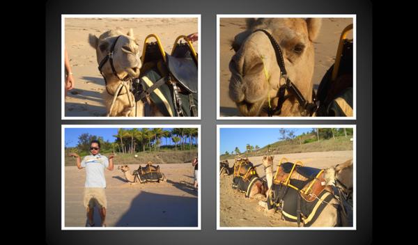 camel5.bmp