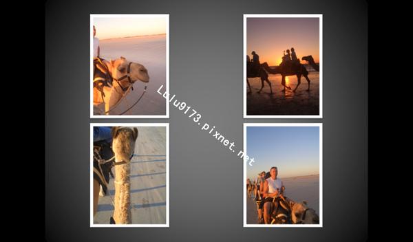 camel9.bmp