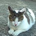 這裡的貓個個都好胖~~