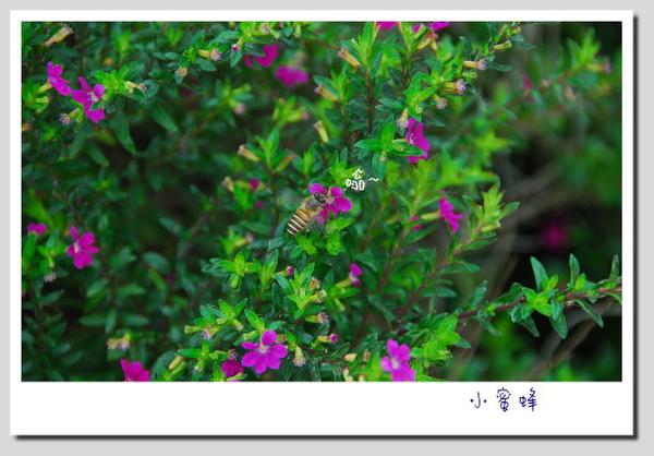 DSC_0023-1.jpg