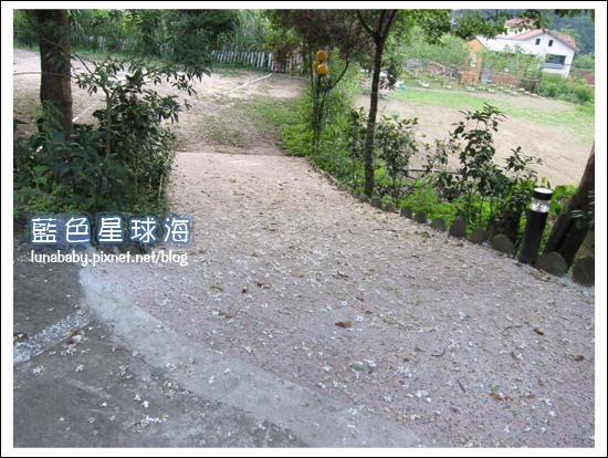 4y9m苗栗南庄24橄欖樹.jpg