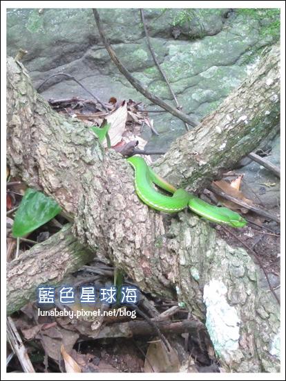 4y9m苗栗南庄68護魚步道.jpg