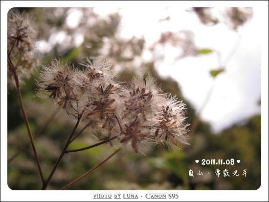 20111109-59常寂光寺