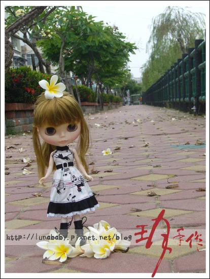 20100508綠川旁桐花10.jpg